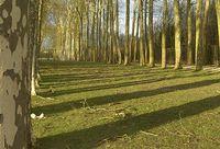 Branches tombées dans le parc du Château © Françoise Sancho